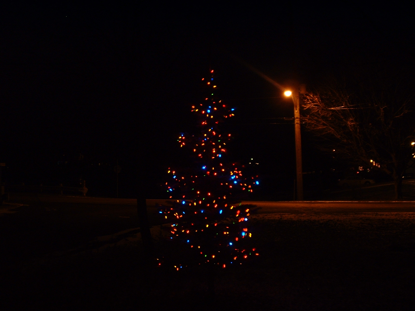 our blue spruce with noma multi colour led christmas lights