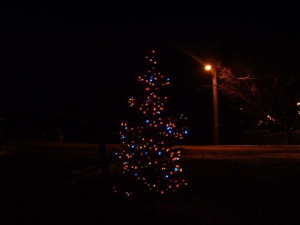 Our blue spruce with Noma Multi-colour LED Christmas lights